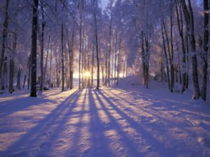 A beautiful winter scene with the sun shining in between the bare snow-covered trees.
