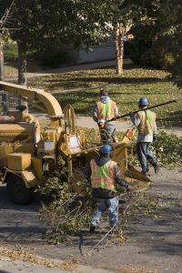Subject: City workers trimming street trees