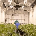 Must-have safety equipment for anyone in the cannabis industry